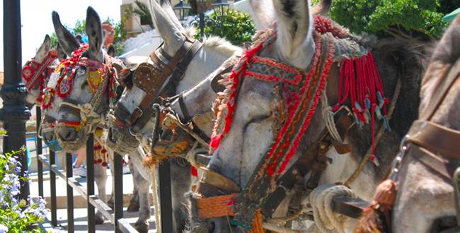Recorrer Málaga en coche