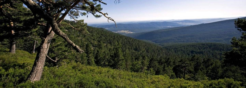 paisajes otoñales