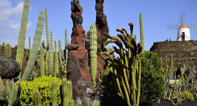 Jardin Cactus - Lanzarote