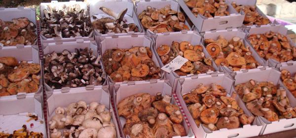Mercado-de-las-setas-de-Guardiola-de-Bergueda_turisme_bloc_doble